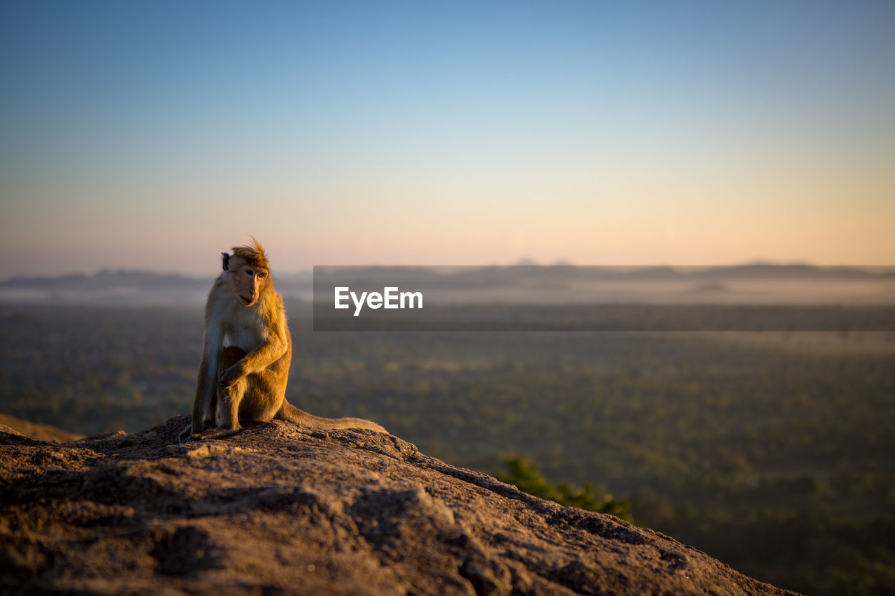 Monkey sitting on mountain against sky during sunrise