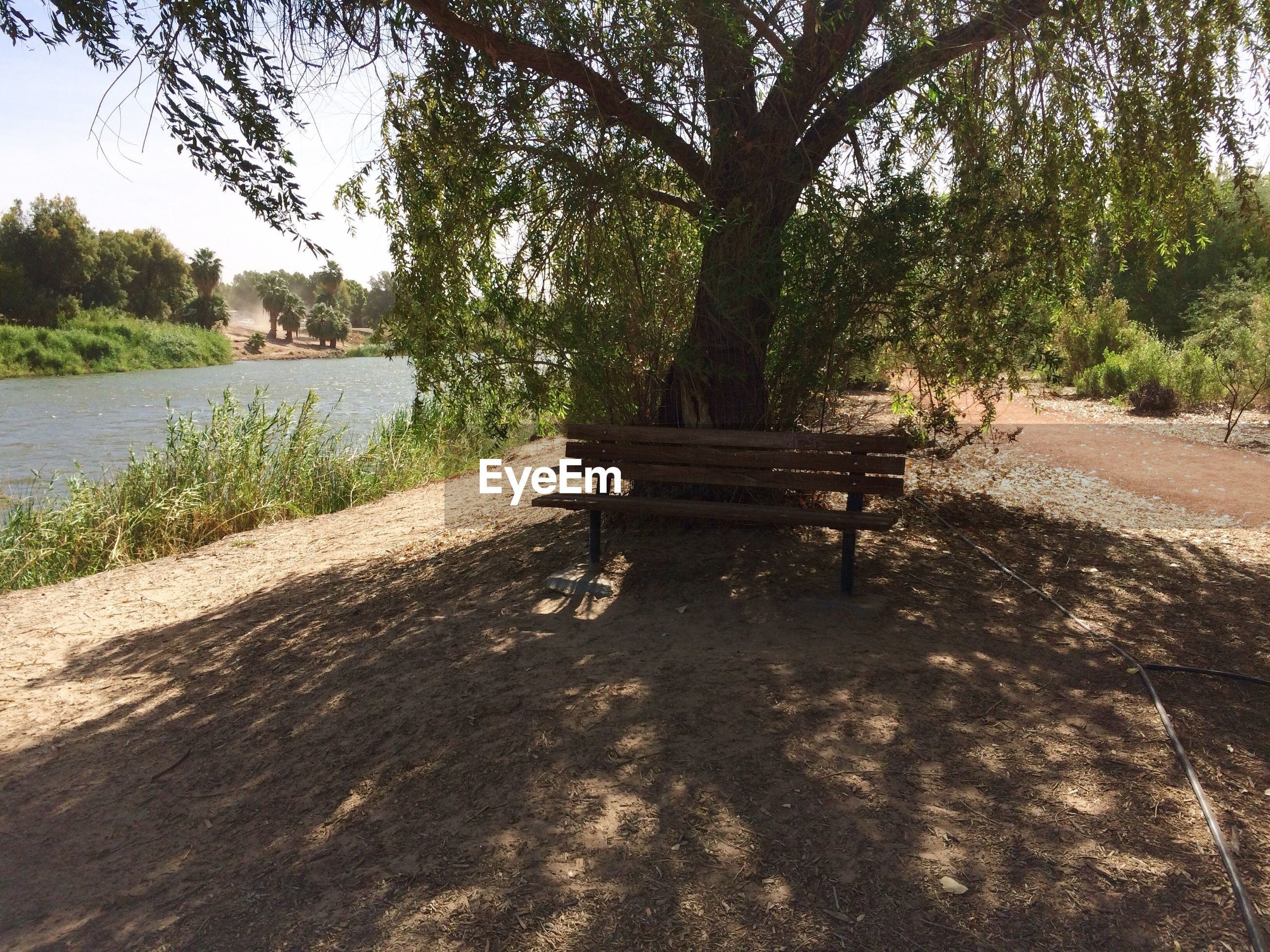 tree, plant, nature, bench, seat, water, shadow, tranquility, growth, day, park, sunlight, land, outdoors, no people, beauty in nature, absence, tranquil scene, lake, park bench