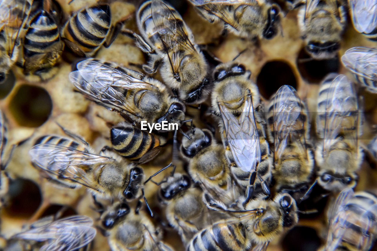 animals in the wild, animal themes, insect, animal wildlife, large group of animals, close-up, no people, nature, bee, outdoors, day, honeycomb