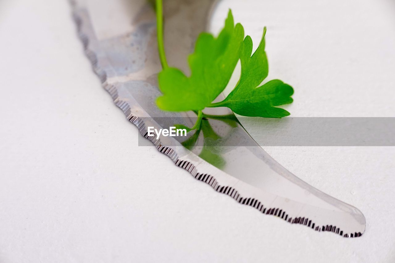 High angle view of leaf with knife on white background