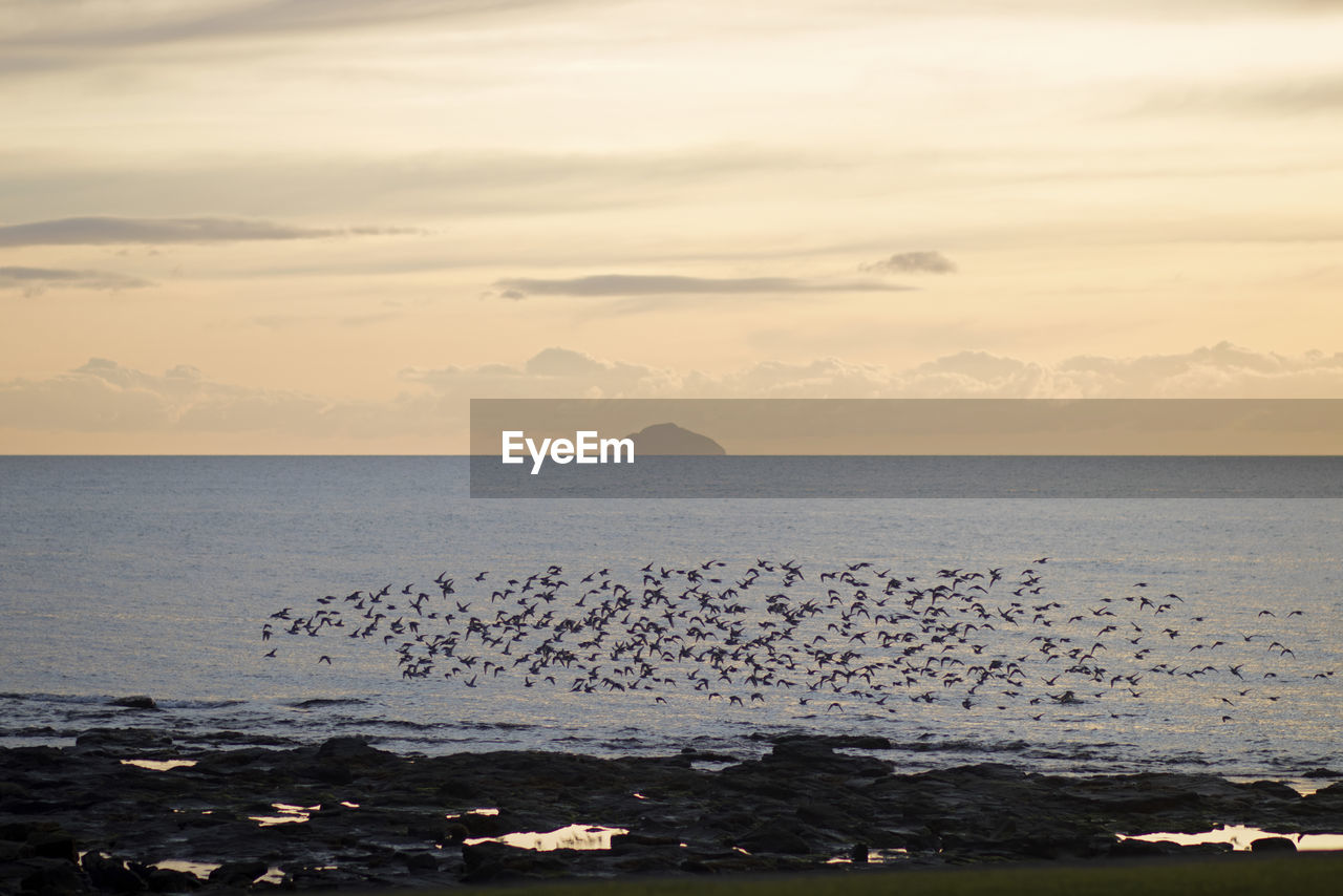 water, sea, sky, scenics - nature, beauty in nature, horizon over water, horizon, sunset, cloud - sky, tranquil scene, tranquility, nature, idyllic, land, no people, animal wildlife, animal, animal themes, animals in the wild, outdoors, flock of birds