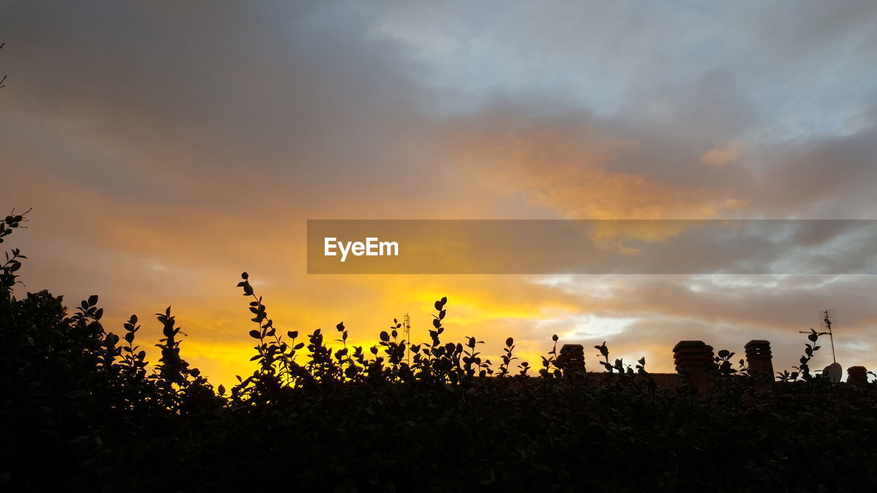 sunset, sky, silhouette, nature, beauty in nature, cloud - sky, growth, outdoors, no people, tree, tranquility, scenics, day