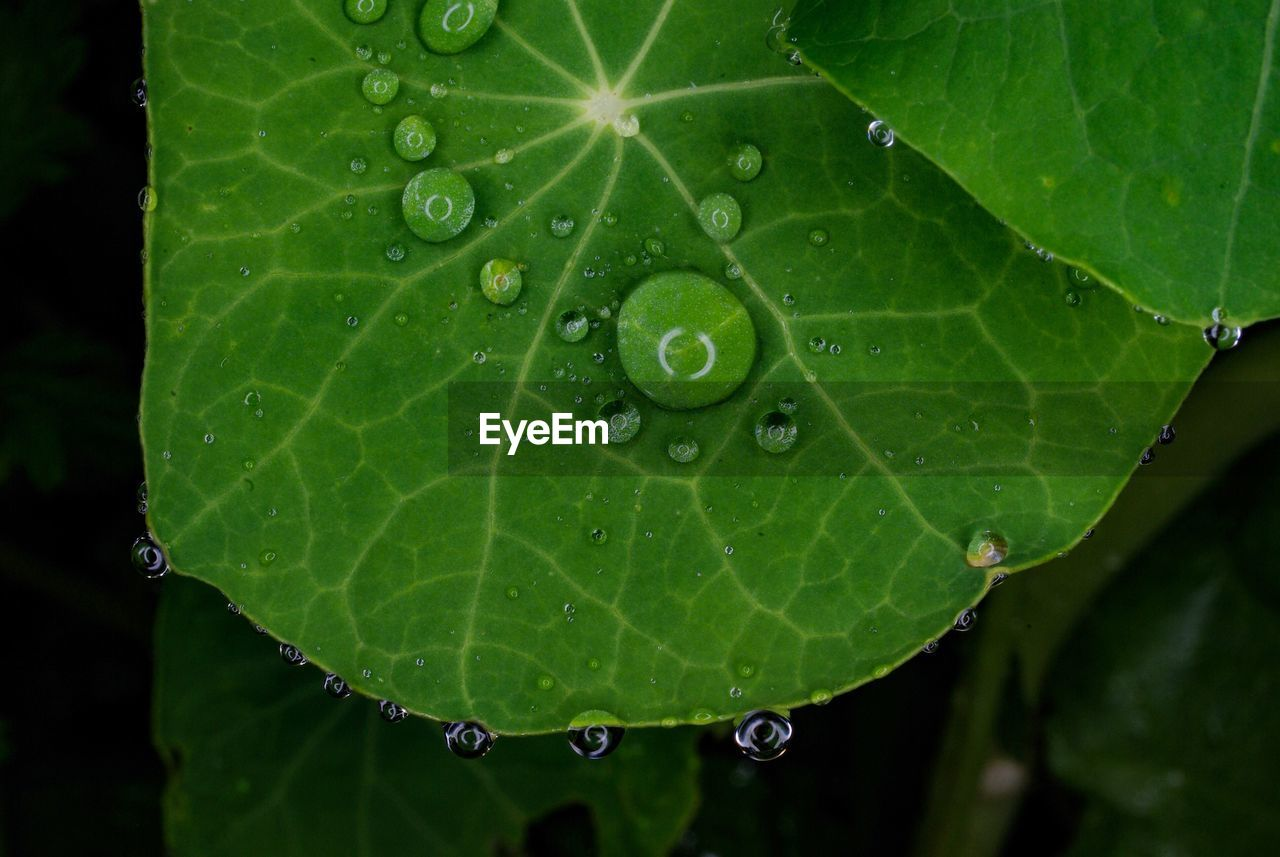 leaf, drop, water, wet, green color, close-up, freshness, raindrop, droplet, nature, no people, beauty in nature, fragility, day, outdoors