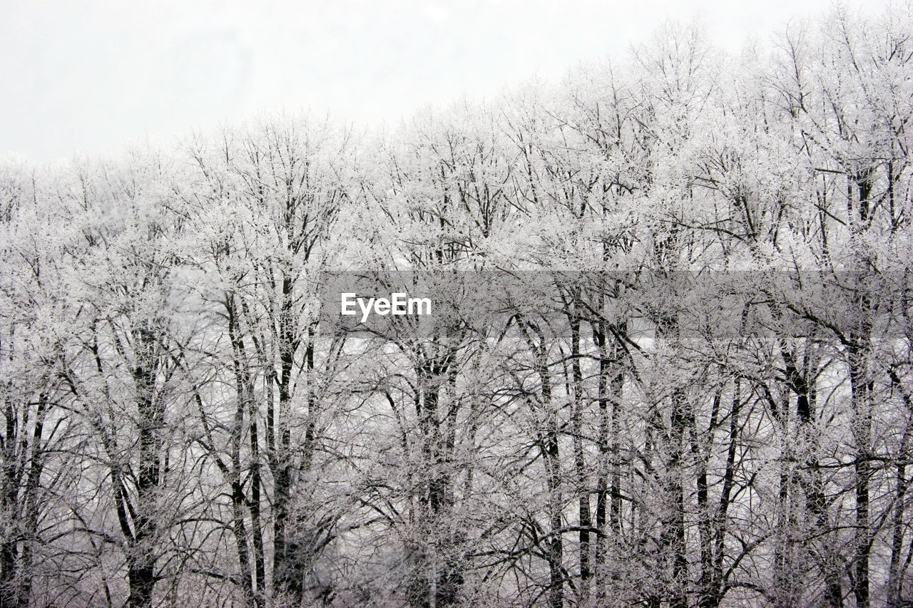 tree, plant, winter, cold temperature, snow, no people, nature, bare tree, beauty in nature, tranquility, day, branch, sky, scenics - nature, tranquil scene, growth, land, low angle view, frozen, outdoors, snowing