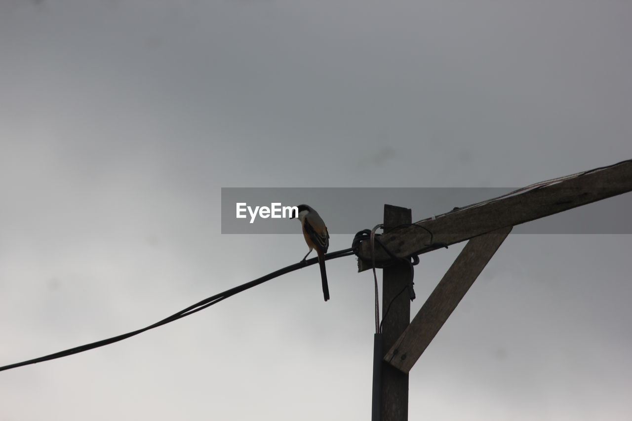 bird, vertebrate, animal themes, animal, animal wildlife, animals in the wild, perching, one animal, sky, low angle view, no people, nature, outdoors, wood - material, copy space, day, technology, cable, focus on foreground, metal, electricity, power supply