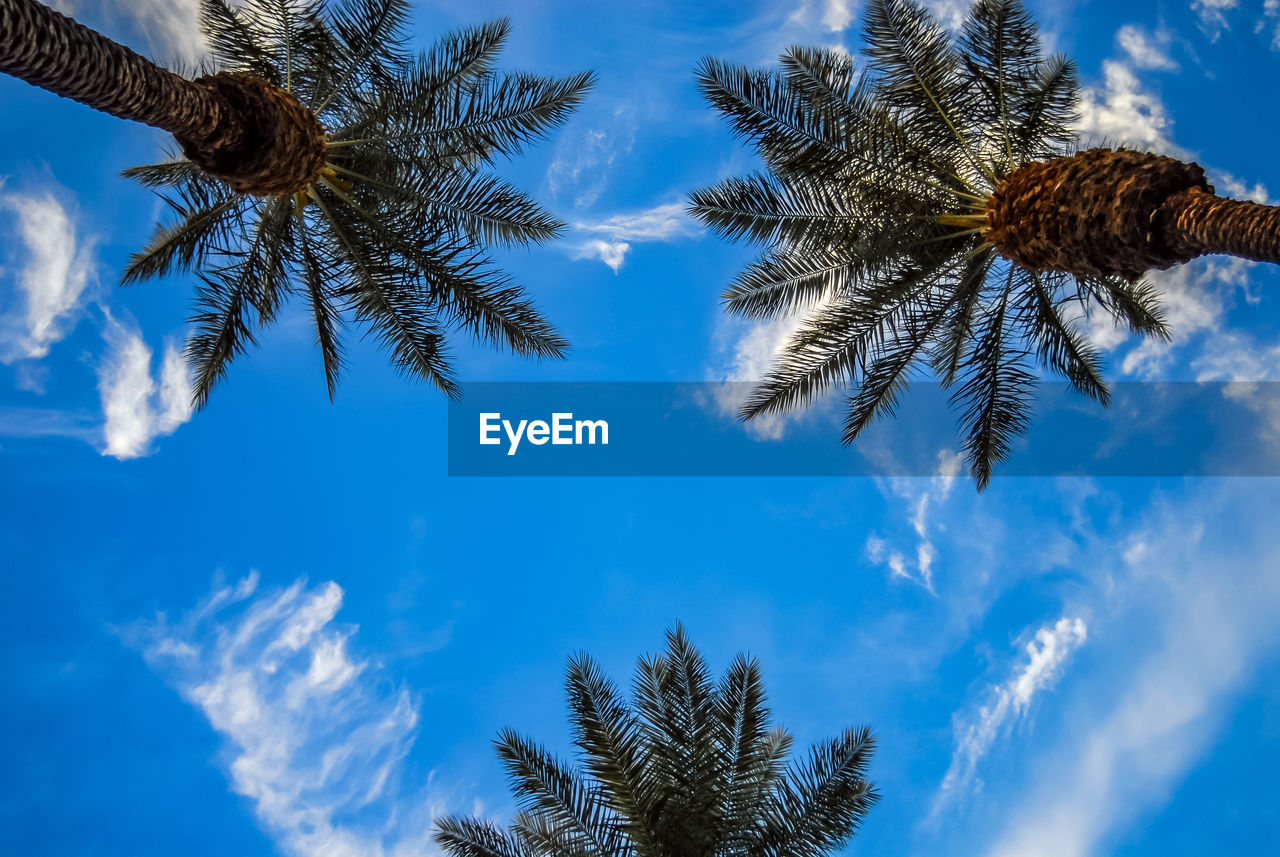 sky, tree, palm tree, plant, low angle view, cloud - sky, tropical climate, growth, beauty in nature, no people, blue, tranquility, nature, day, tree trunk, trunk, tranquil scene, outdoors, scenics - nature, sunlight, palm leaf, coconut palm tree, tropical tree