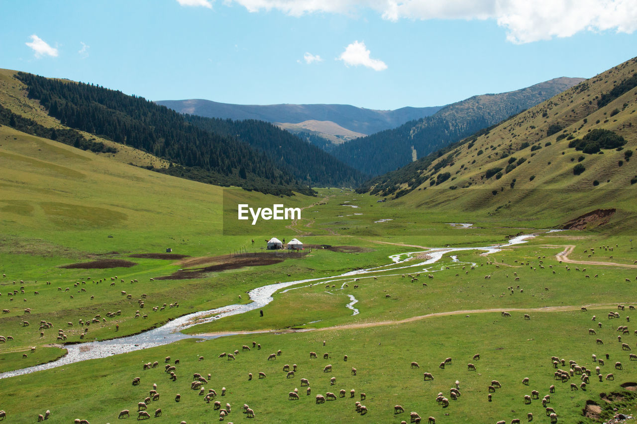 Green alpine valley in assy plateau with a river, ethnic houses - yurts, sheep and a road, summer