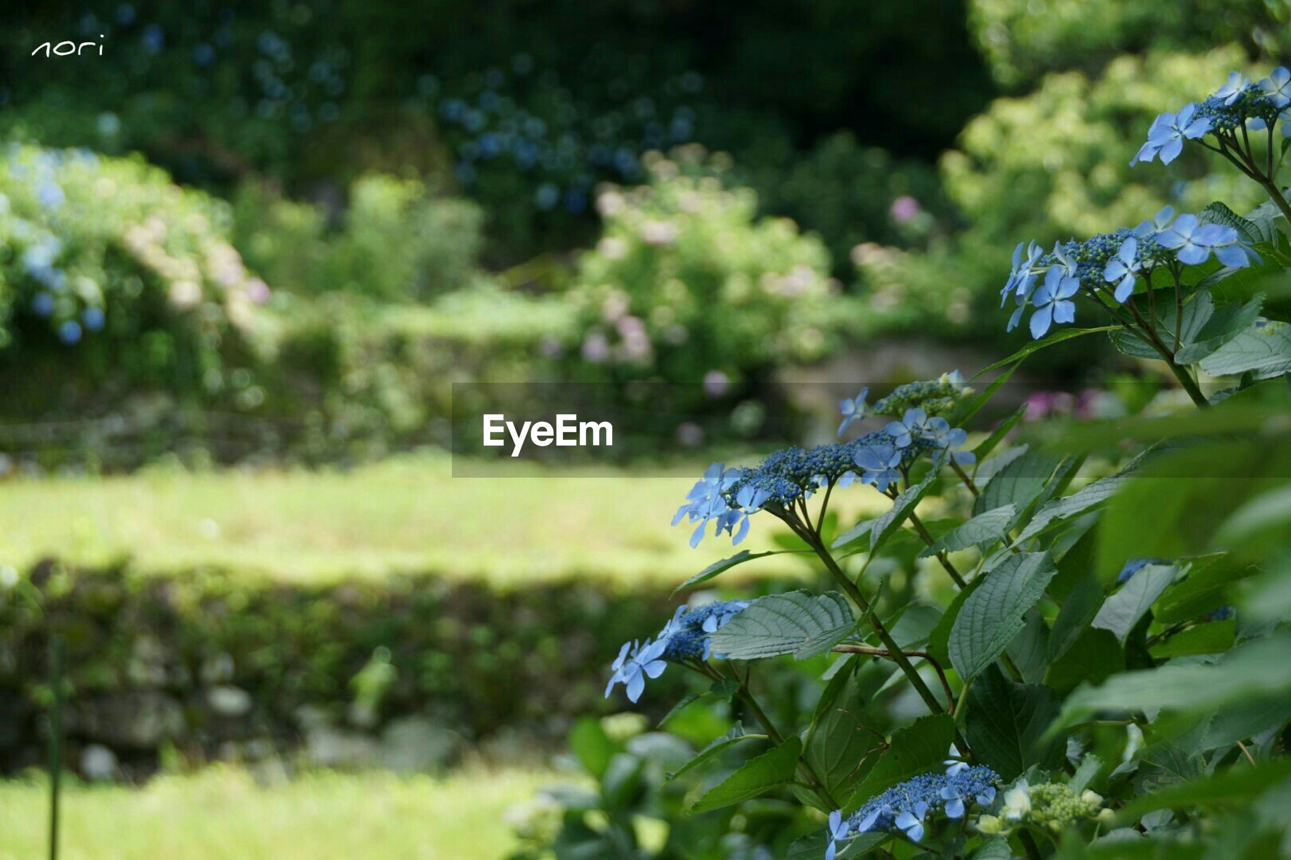 flower, growth, freshness, focus on foreground, plant, purple, beauty in nature, green color, fragility, nature, close-up, selective focus, blooming, leaf, field, stem, blue, park - man made space, day, green