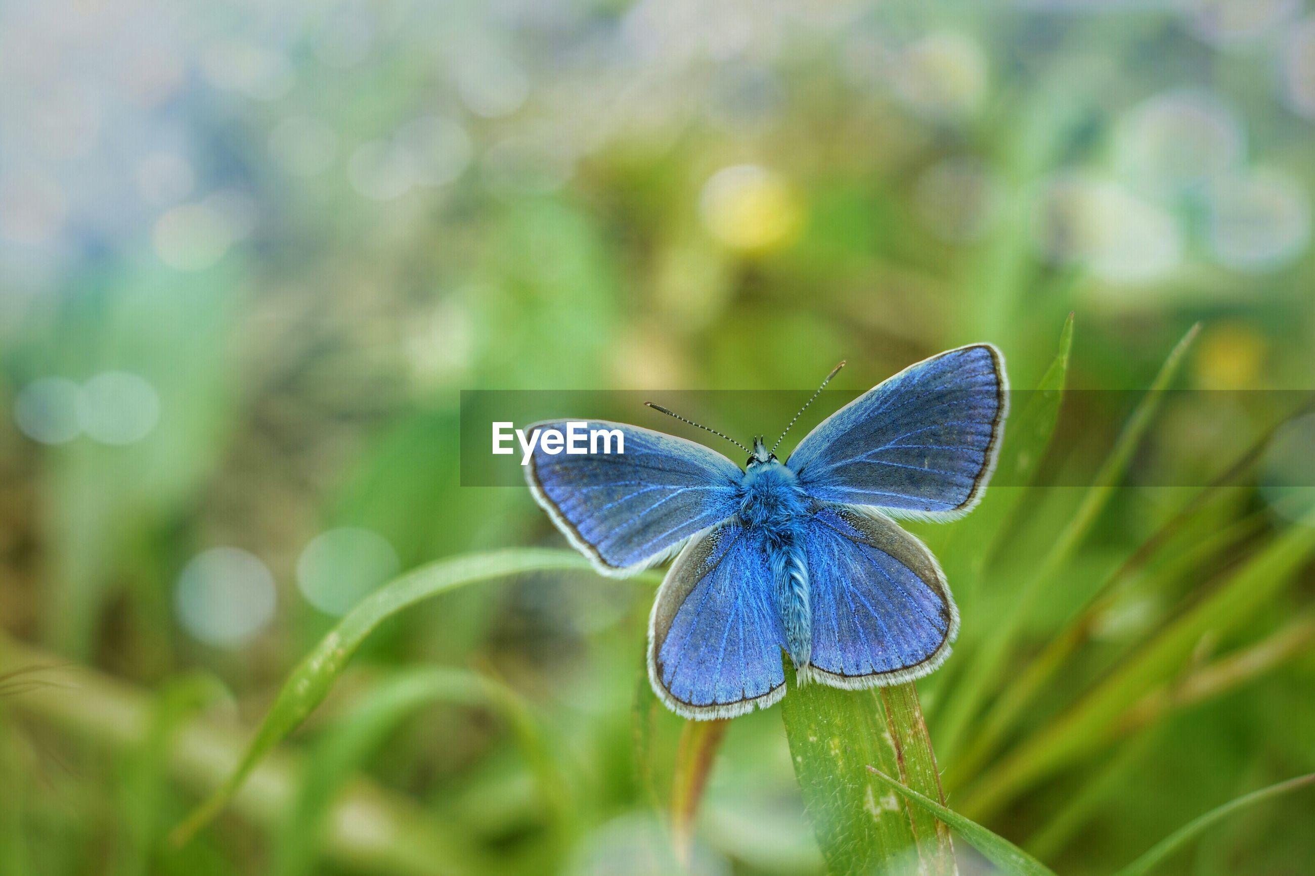 one animal, insect, animal themes, animals in the wild, purple, wildlife, focus on foreground, blue, close-up, flower, butterfly - insect, beauty in nature, butterfly, fragility, nature, plant, freshness, outdoors, day, selective focus