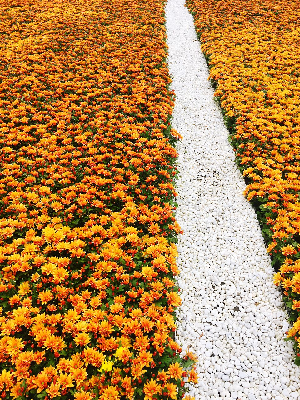 High Angle View Of Yellow Flowers During Autumn