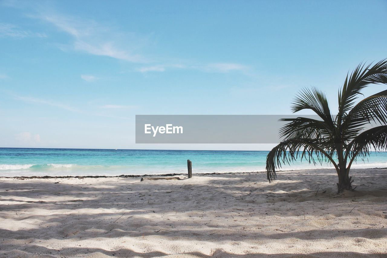 beach, sea, land, sky, tropical climate, water, palm tree, horizon, horizon over water, beauty in nature, tree, sand, scenics - nature, tranquility, nature, tranquil scene, day, sunlight, idyllic, outdoors, coconut palm tree, palm leaf