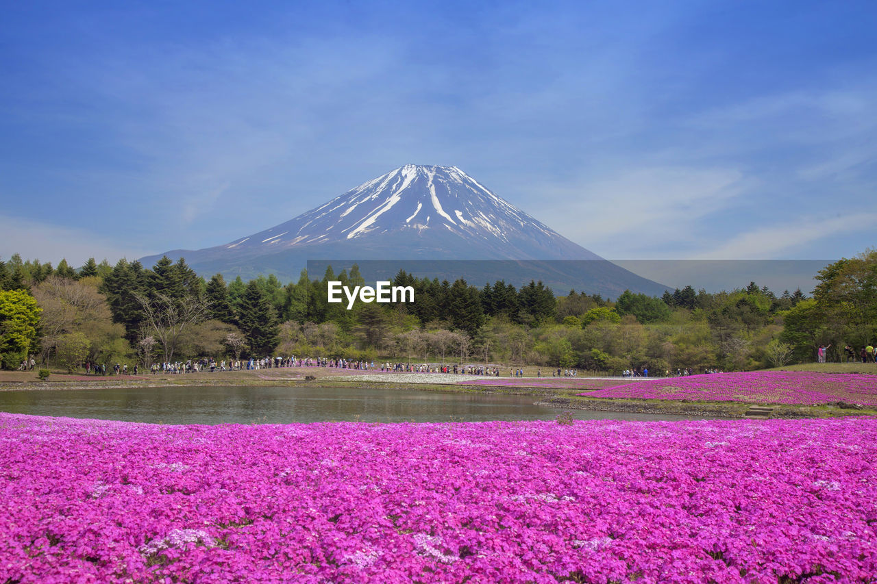 plant, beauty in nature, mountain, scenics - nature, flower, tree, flowering plant, sky, tranquil scene, tranquility, nature, land, environment, mountain peak, day, cloud - sky, snow, travel destinations, landscape, growth, snowcapped mountain, no people, pink color, outdoors, purple, flowerbed