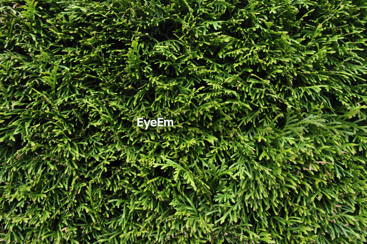 green, shrub, healthy, adventure, harmony, nature, luxury, day, no people