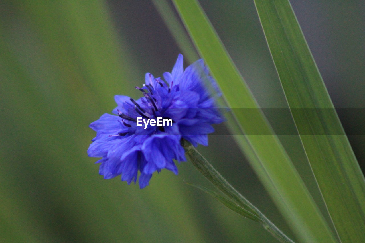 flower, nature, growth, plant, spring, beauty in nature, petal, blooming, no people, fragility, freshness, flower head