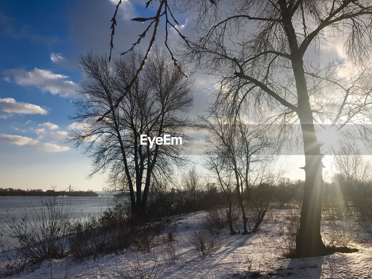 nature, bare tree, tranquil scene, winter, tree, cold temperature, tranquility, beauty in nature, scenics, snow, outdoors, sunlight, landscape, sky, no people, branch, day