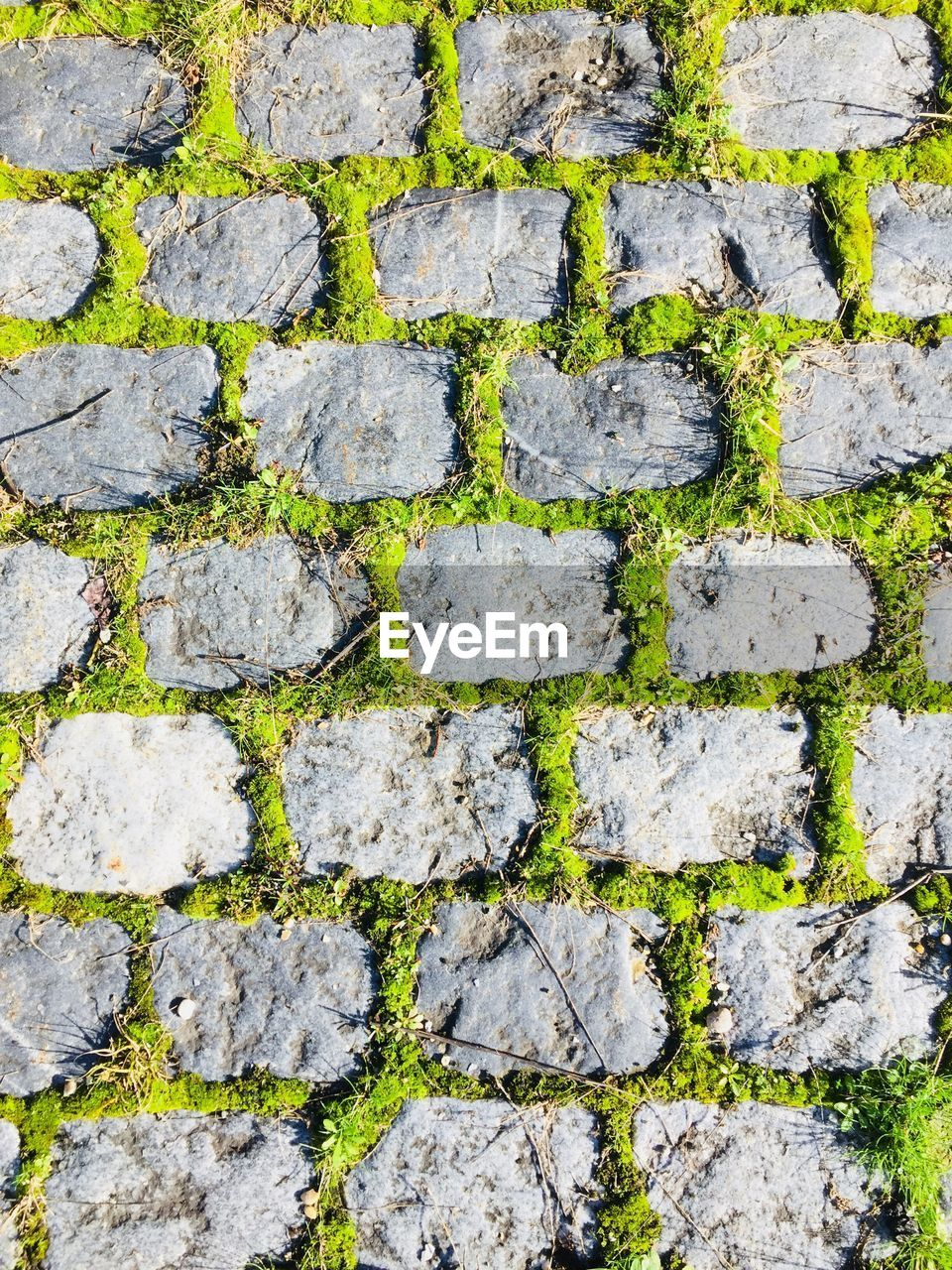 full frame, stone tile, backgrounds, day, moss, no people, outdoors, textured, close-up