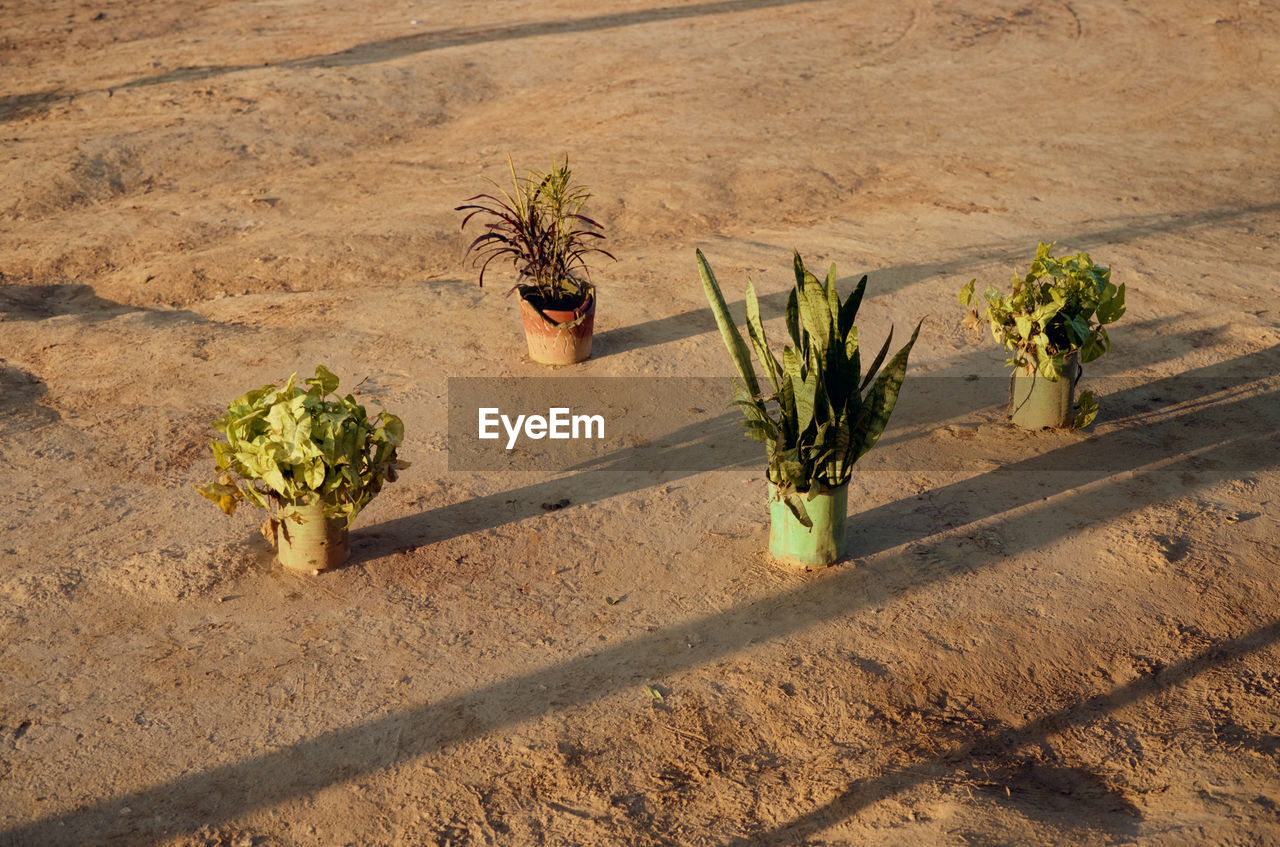 High angle view of potted plants on field