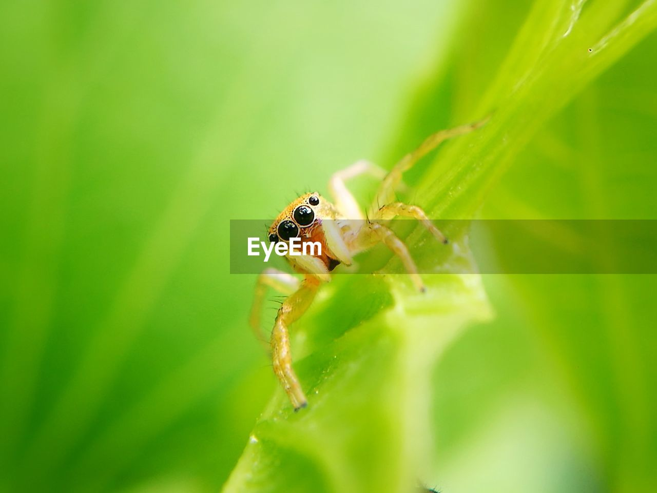 animal wildlife, invertebrate, insect, animals in the wild, animal, plant part, animal themes, one animal, green color, leaf, close-up, selective focus, plant, nature, day, no people, zoology, growth, arthropod, jumping spider, animal eye