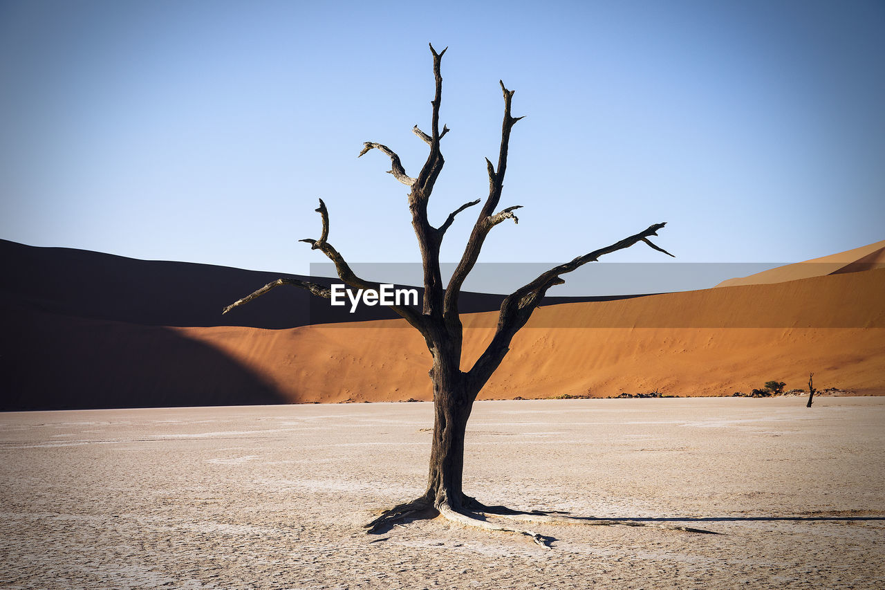 Bare Tree At Namib Desert