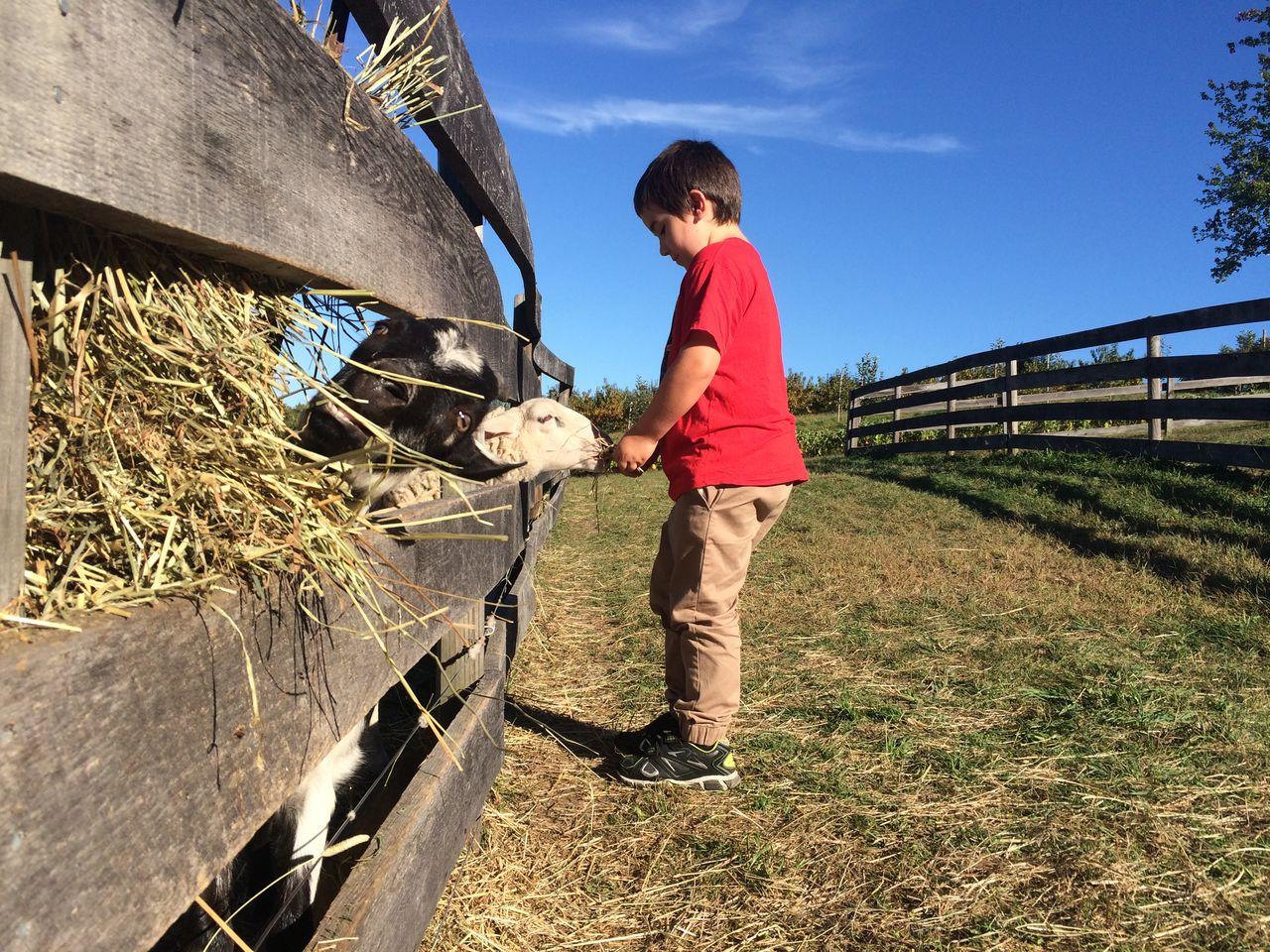 Side view of cute boy feeding goat at farm