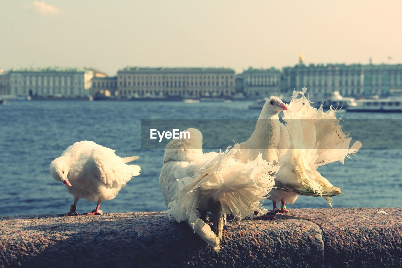 bird, animal themes, group of animals, animal, water, vertebrate, architecture, nature, built structure, sky, building exterior, animal wildlife, animals in the wild, no people, focus on foreground, seagull, river, city, day, outdoors
