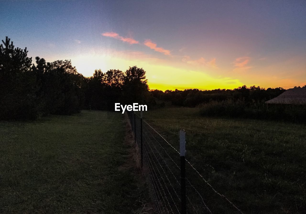 sunset, tranquility, tree, nature, tranquil scene, scenics, field, grass, landscape, beauty in nature, no people, sky, outdoors, growth, rural scene, day