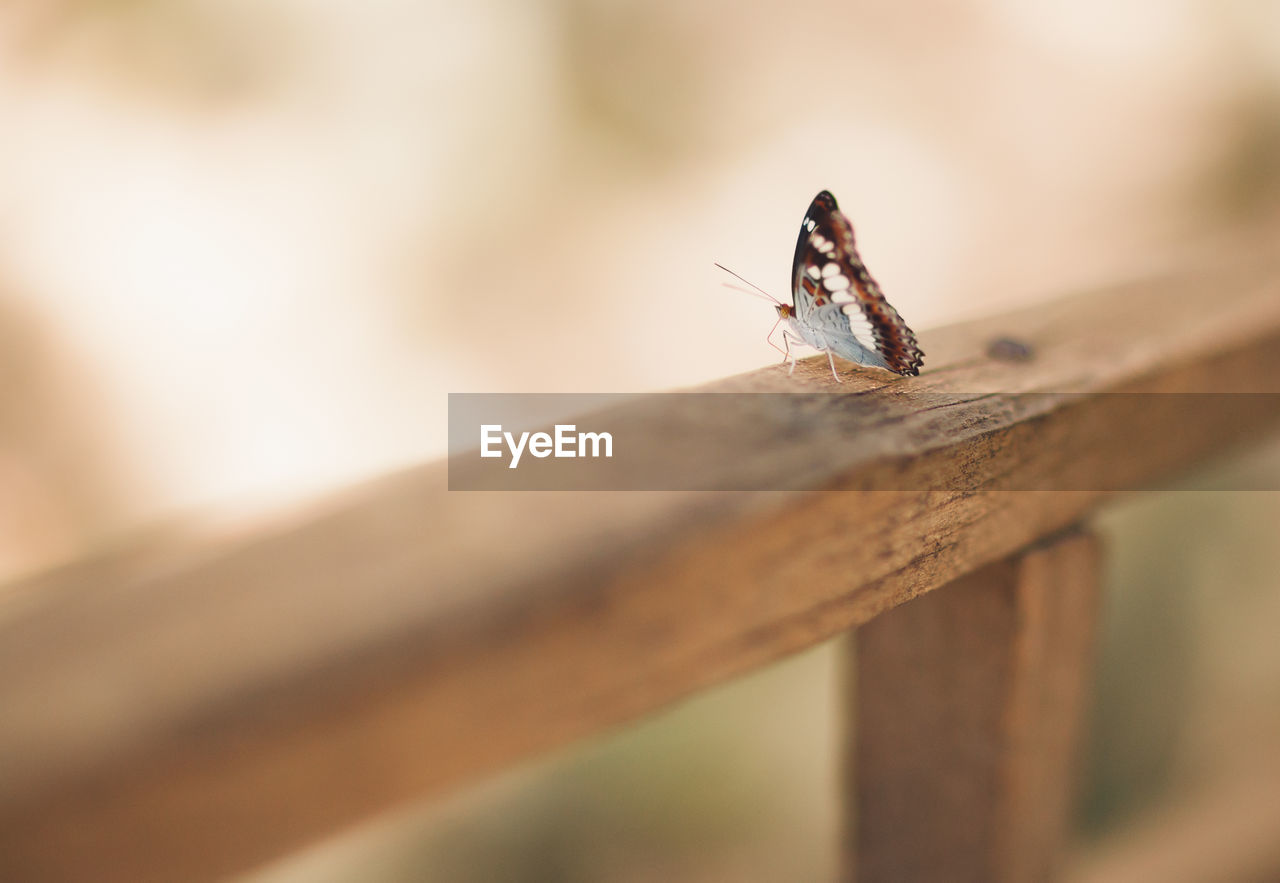 High angle view of butterfly on railing