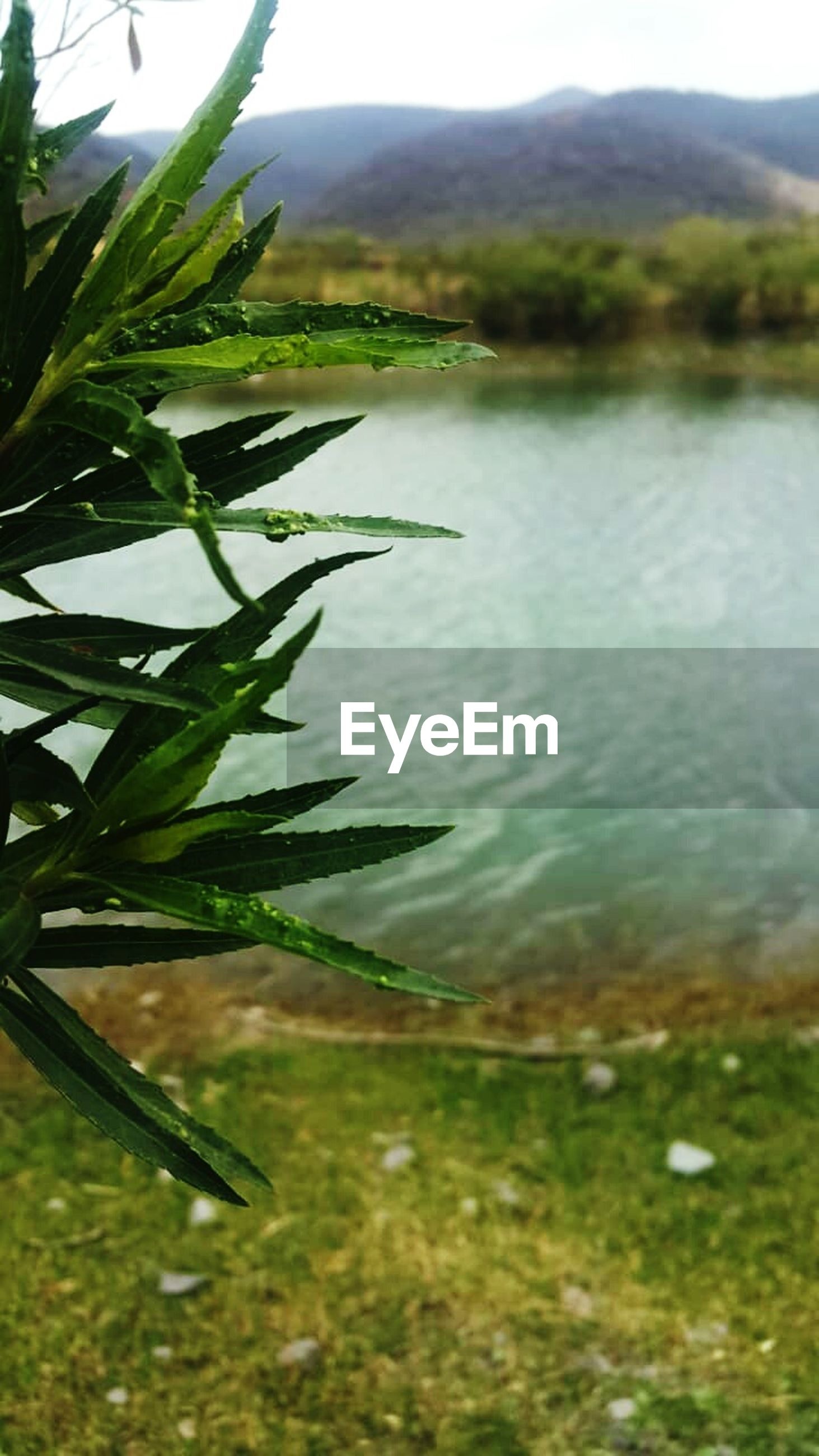 plant, water, green color, beauty in nature, growth, no people, nature, lake, day, tranquility, tranquil scene, plant part, leaf, focus on foreground, grass, scenics - nature, close-up, outdoors, reflection