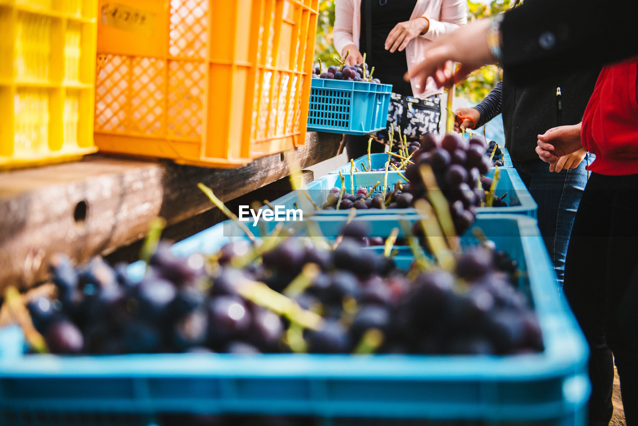 Midsection of people standing by crates with grapes