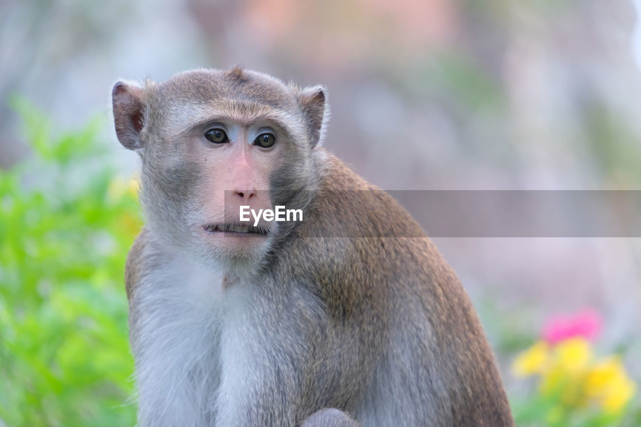 focus on foreground, primate, animal wildlife, animals in the wild, one animal, mammal, vertebrate, looking, day, close-up, looking away, no people, portrait, nature, outdoors