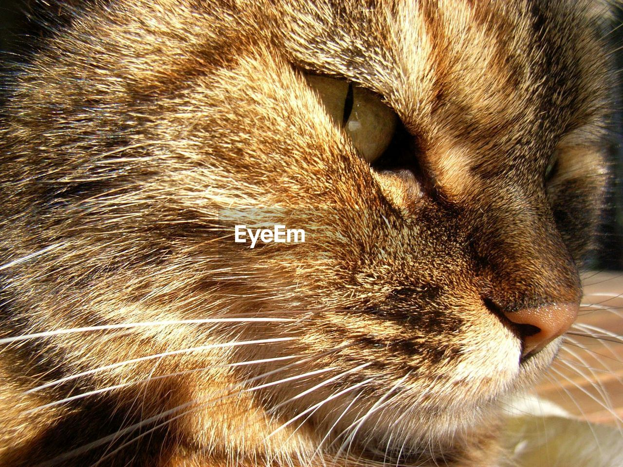 one animal, pets, animal themes, domestic cat, domestic animals, mammal, close-up, whisker, feline, no people, indoors, nature, day