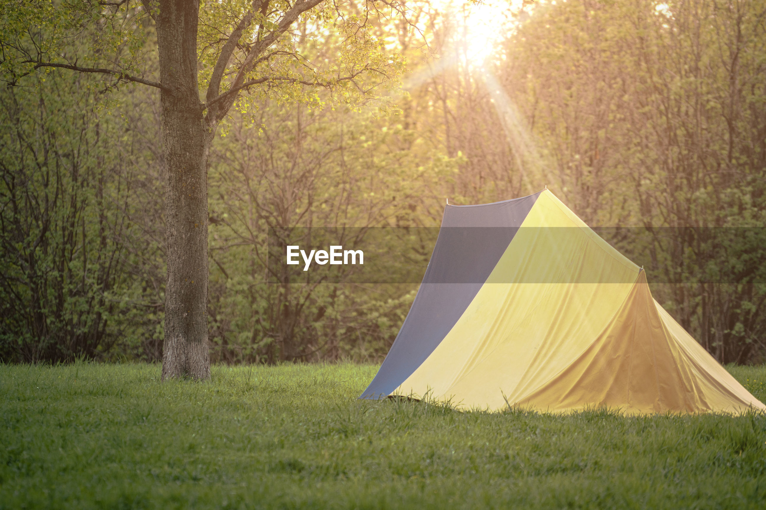 Tent on field against trees in forest