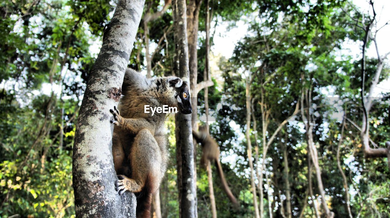 tree, mammal, animal themes, animal, animal wildlife, plant, animals in the wild, one animal, forest, nature, vertebrate, no people, focus on foreground, branch, day, tree trunk, trunk, land, outdoors, low angle view
