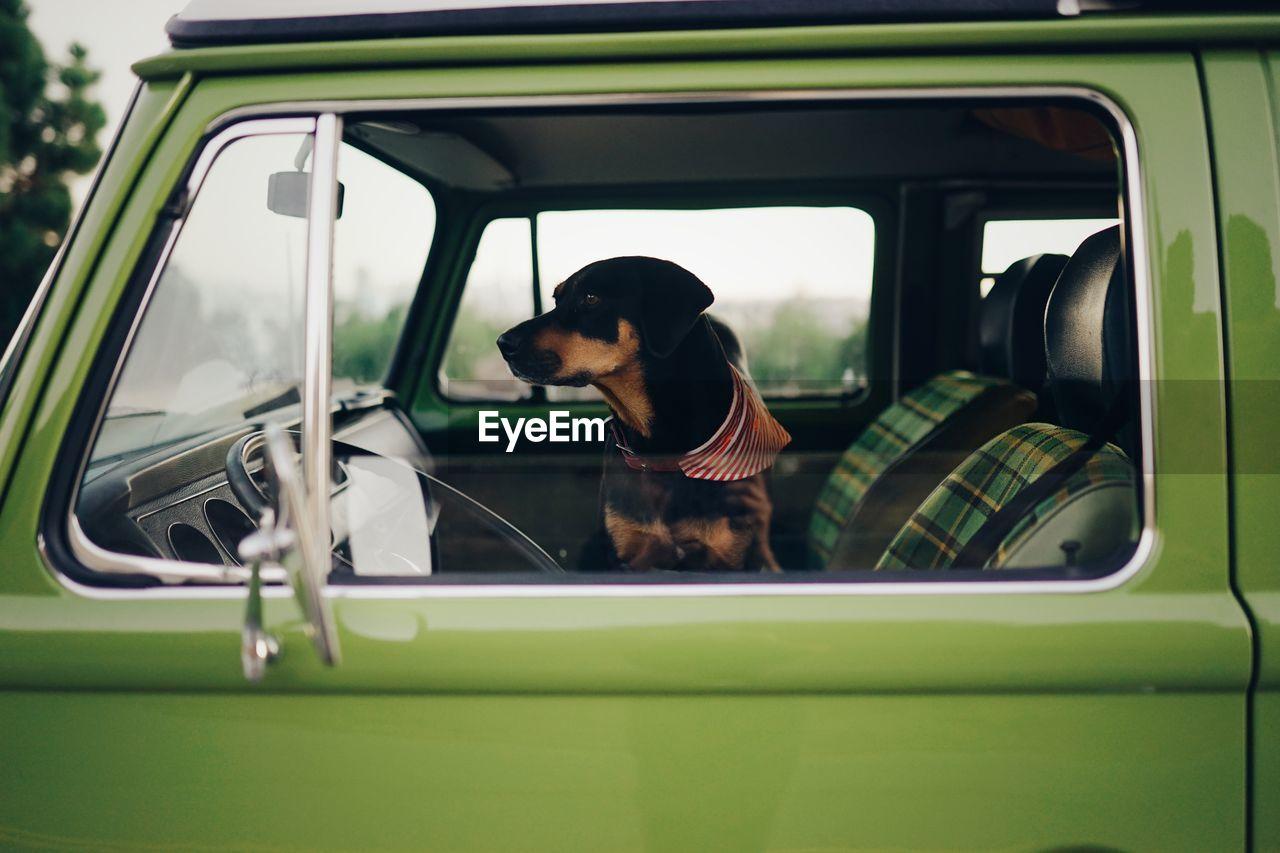 Dog seen through car window