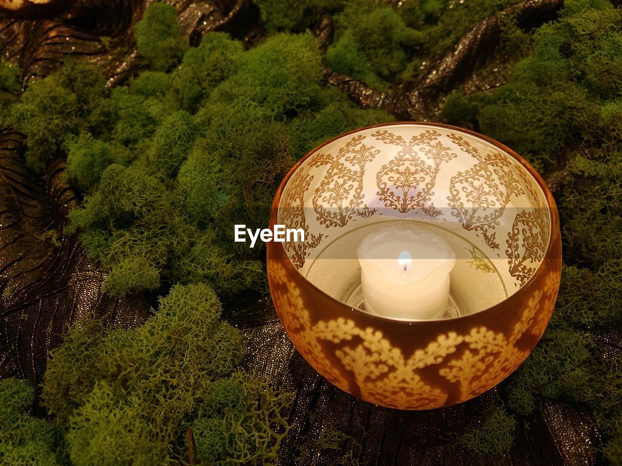 candle, burning, illuminated, plant, flame, fire, nature, lighting equipment, tree, fire - natural phenomenon, high angle view, no people, close-up, heat - temperature, glowing, land, environment, focus on foreground, outdoors, growth, electric lamp, tea light