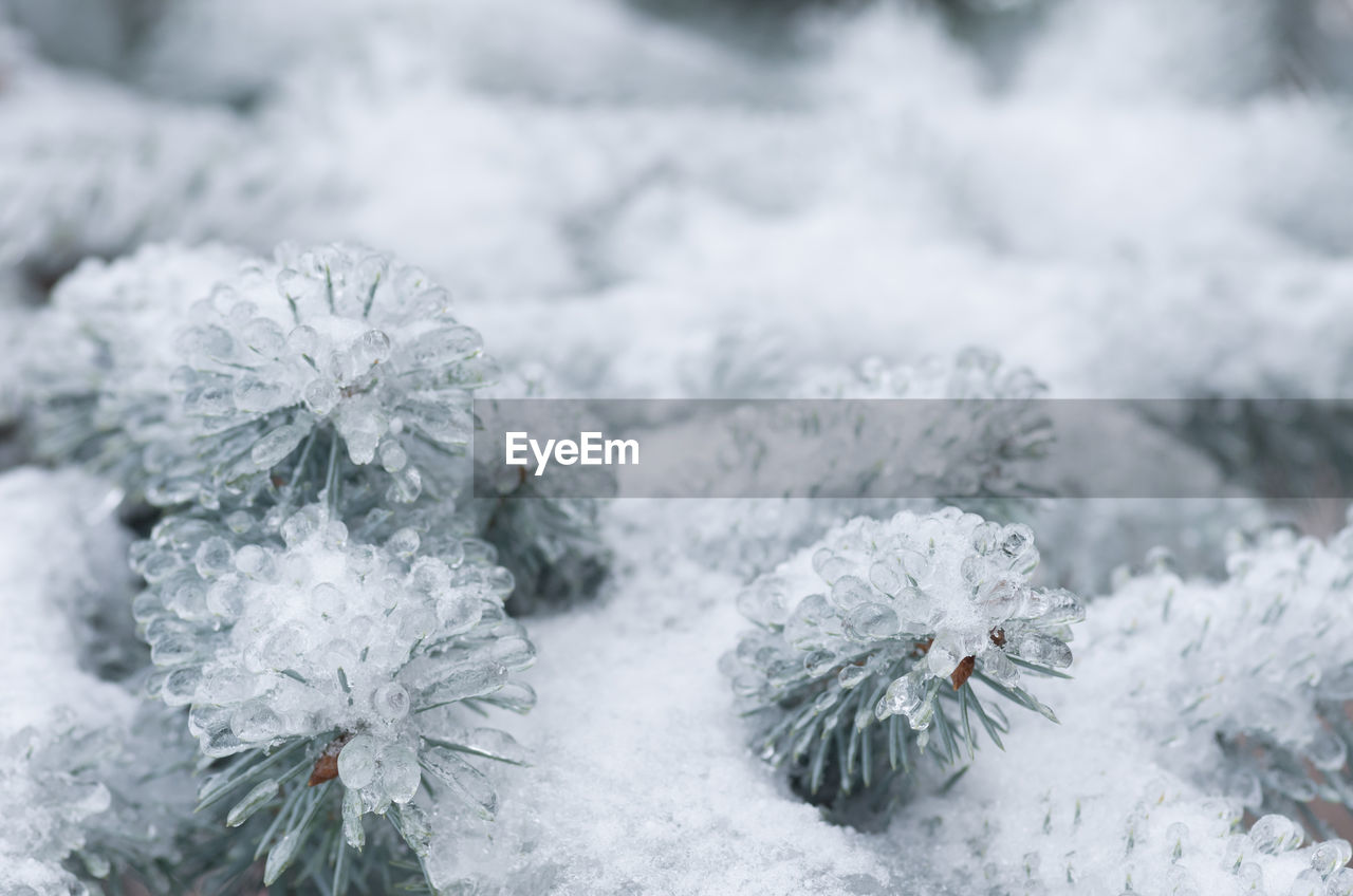 cold temperature, snow, winter, frozen, beauty in nature, white color, nature, plant, close-up, no people, day, flower, ice, flowering plant, covering, focus on foreground, fragility, tranquility, vulnerability, outdoors, flower head, blizzard