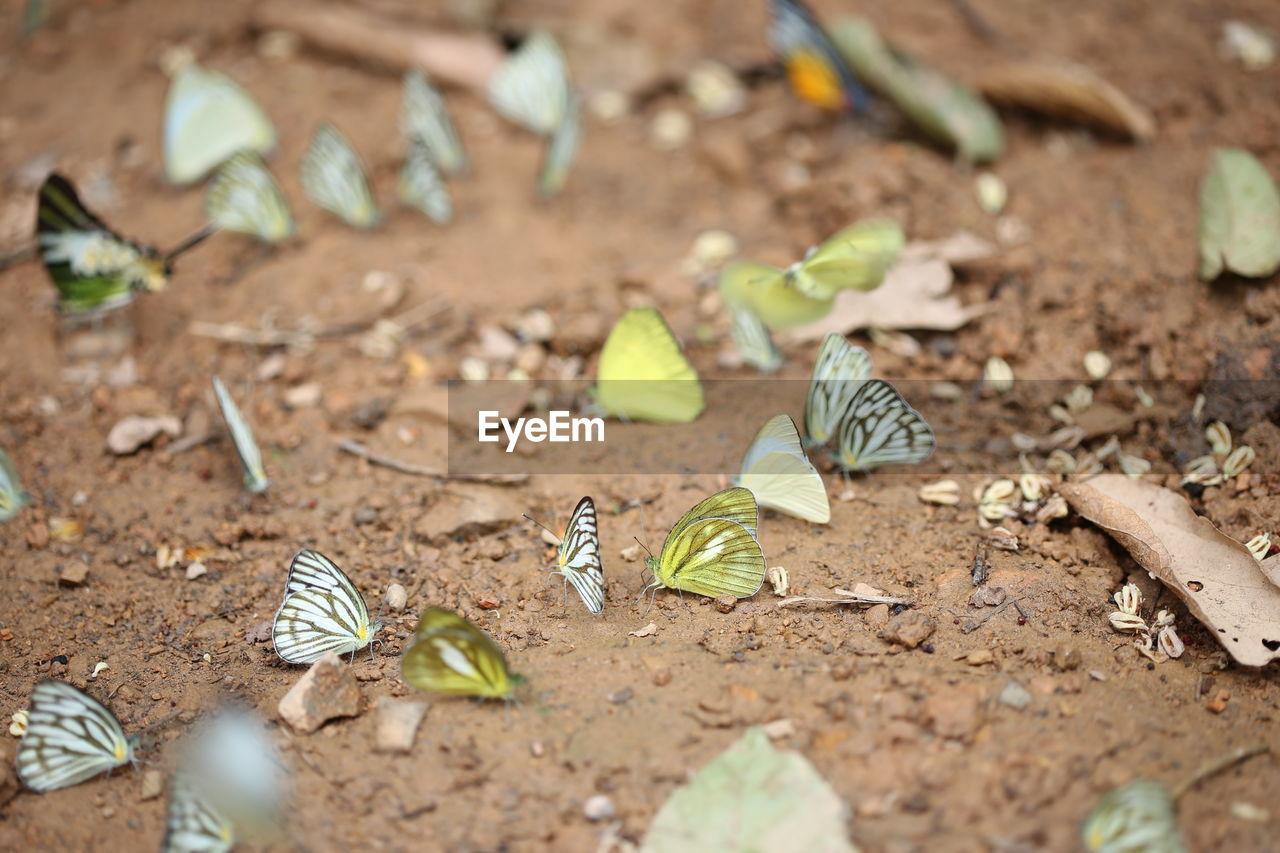 selective focus, leaf, land, plant part, no people, field, high angle view, day, animal themes, nature, animal, group of animals, animal wildlife, dirt, close-up, insect, growth, plant, invertebrate, butterfly - insect, small, leaves