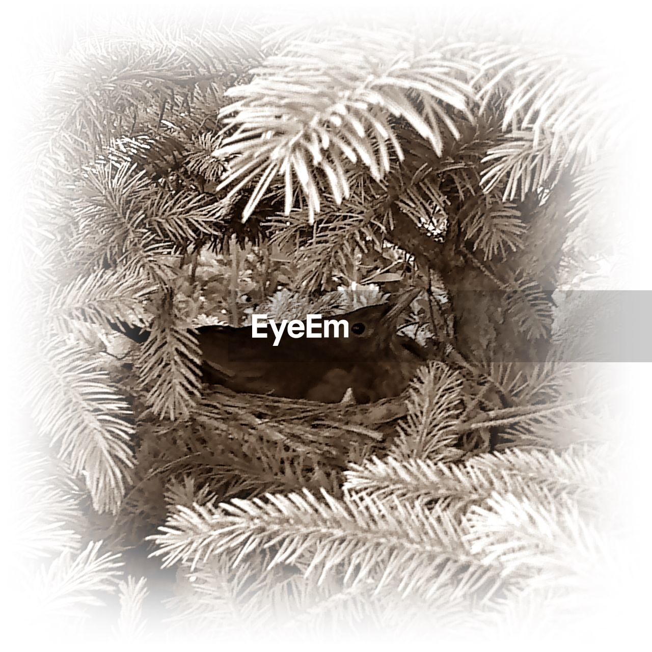 one animal, animal themes, close-up, christmas, no people, indoors, pets, nature, christmas decoration, mammal, day
