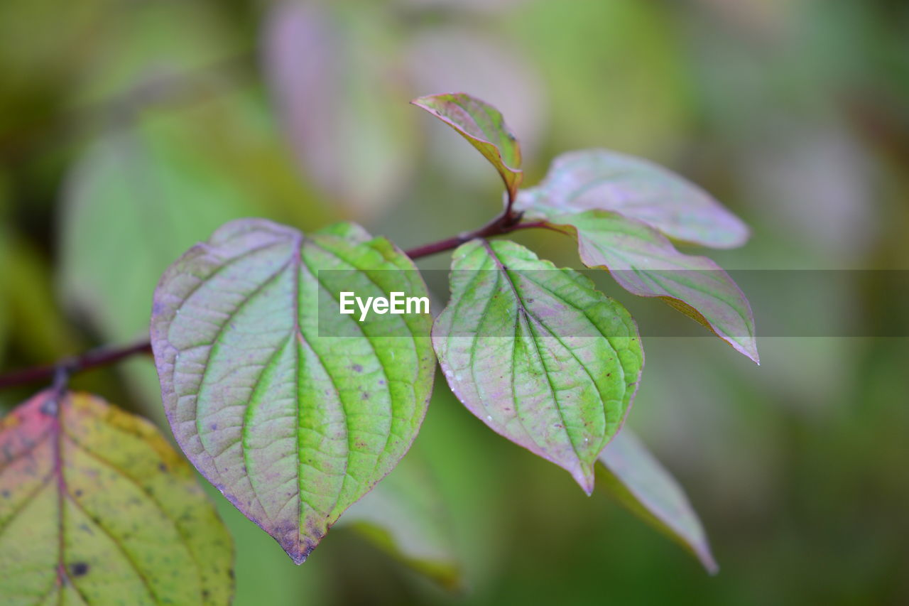 plant part, leaf, growth, plant, close-up, beauty in nature, focus on foreground, green color, no people, nature, day, fragility, vulnerability, leaf vein, leaves, selective focus, freshness, outdoors, tranquility, plant stem