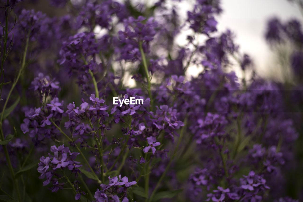 flower, purple, nature, growth, beauty in nature, fragility, plant, no people, day, freshness, outdoors, blooming, close-up, flower head