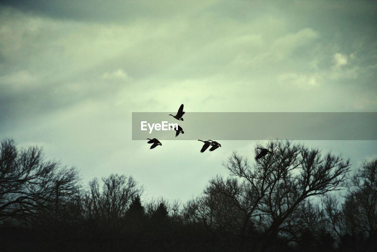 flying, animals in the wild, bird, animal themes, mid-air, low angle view, sky, nature, tree, silhouette, day, no people, outdoors, spread wings, animal wildlife, beauty in nature