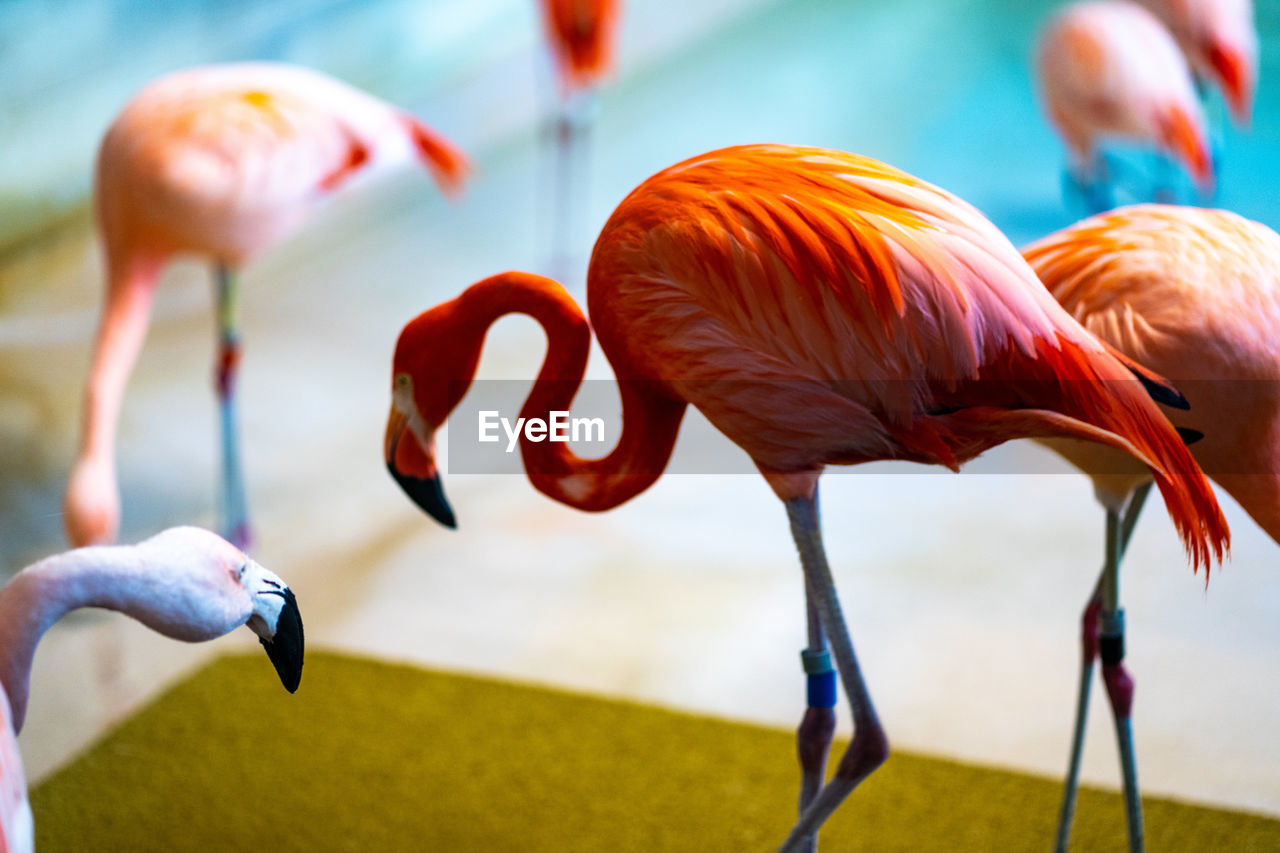 flamingo, animal wildlife, animal themes, animal, vertebrate, animals in the wild, group of animals, bird, focus on foreground, nature, day, pink color, no people, close-up, beauty in nature, medium group of animals, outdoors, orange color, water, land, animal neck, flock of birds