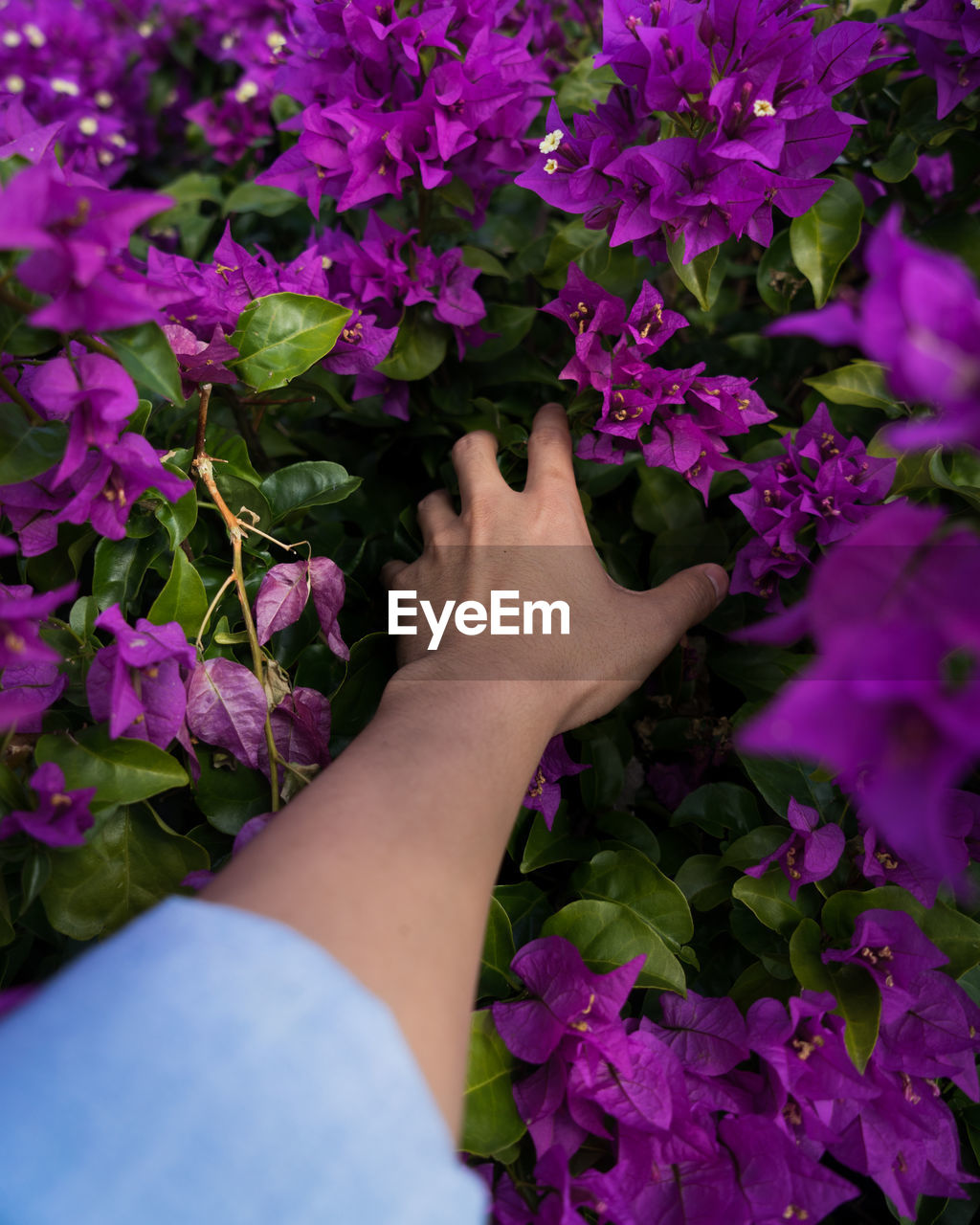 Close-up of hand touching purple flowering plants