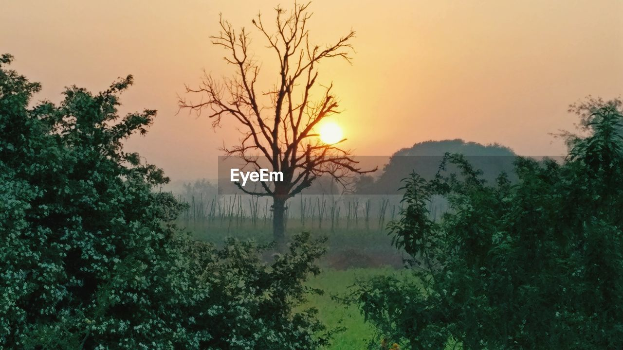 tree, nature, sunset, tranquil scene, beauty in nature, scenics, tranquility, no people, landscape, mist, fog, outdoors, plant, sky, hazy, branch, day