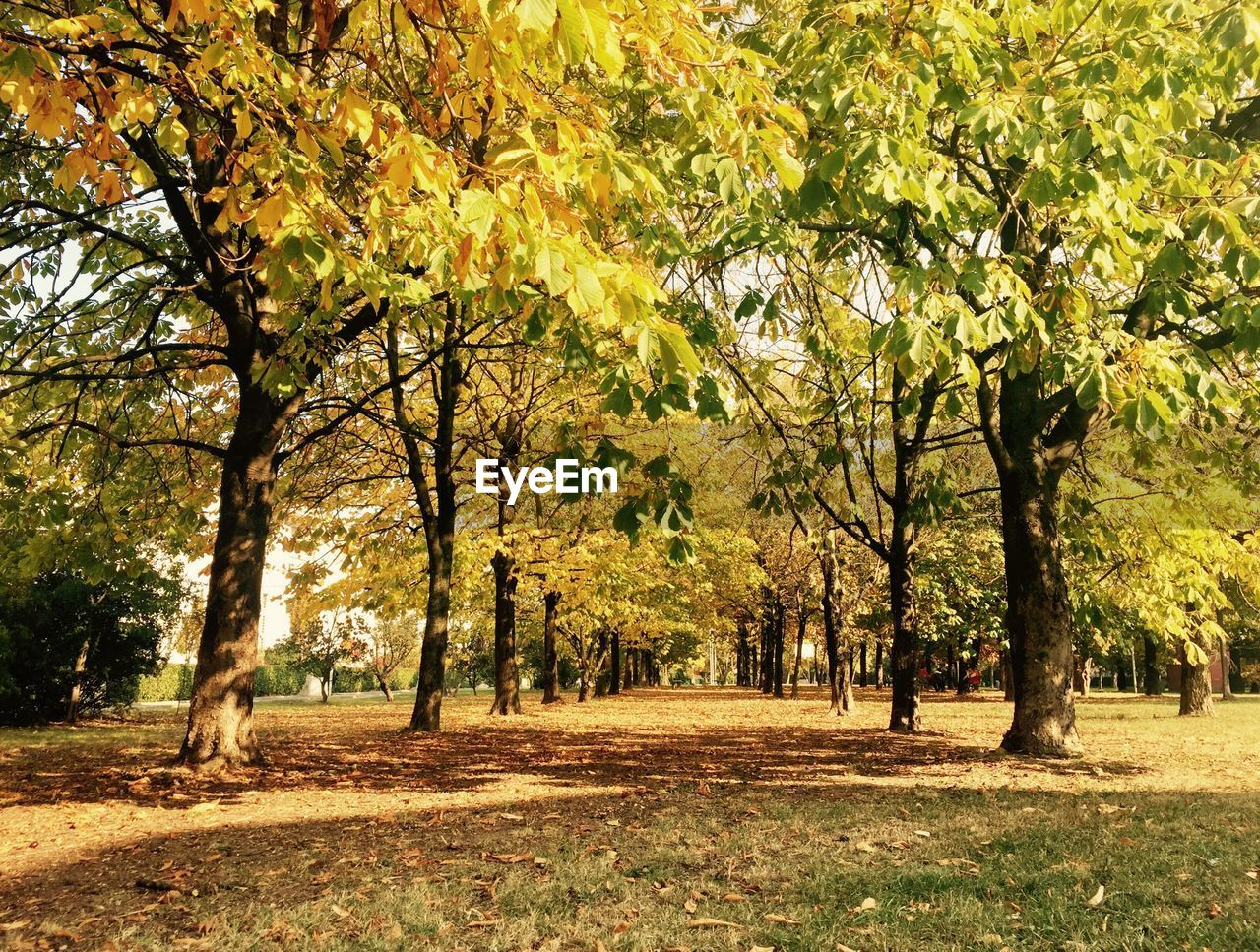 tree, nature, growth, autumn, landscape, beauty in nature, branch, outdoors, day, no people