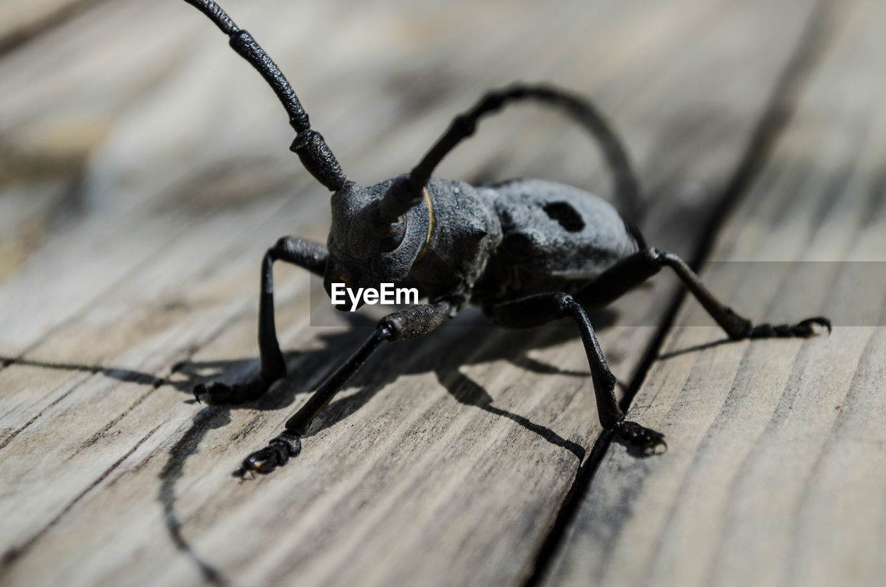 invertebrate, insect, animal, selective focus, animal themes, close-up, one animal, wood - material, animal wildlife, animals in the wild, no people, table, day, nature, animal body part, beetle, animal antenna, black color, sunlight, shadow