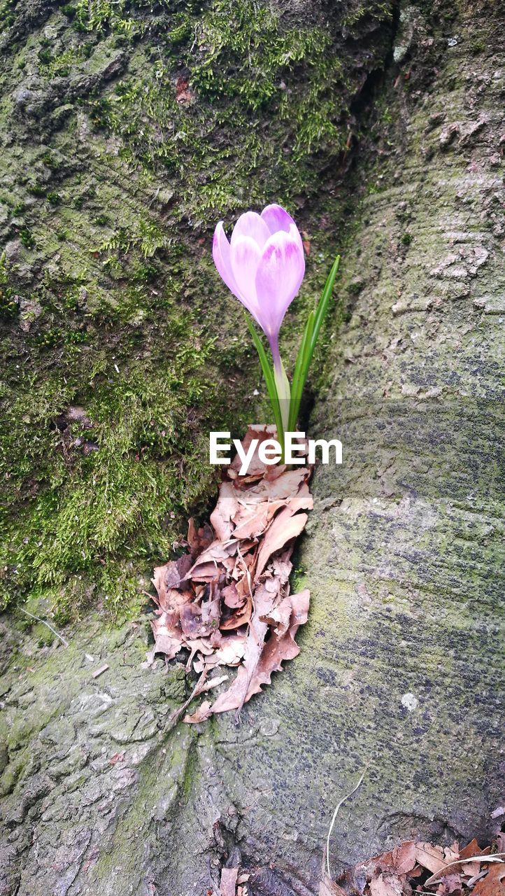 flower, growth, fragility, petal, nature, leaf, high angle view, day, beauty in nature, flower head, no people, plant, outdoors, freshness, green color, pink color, close-up, grass, crocus