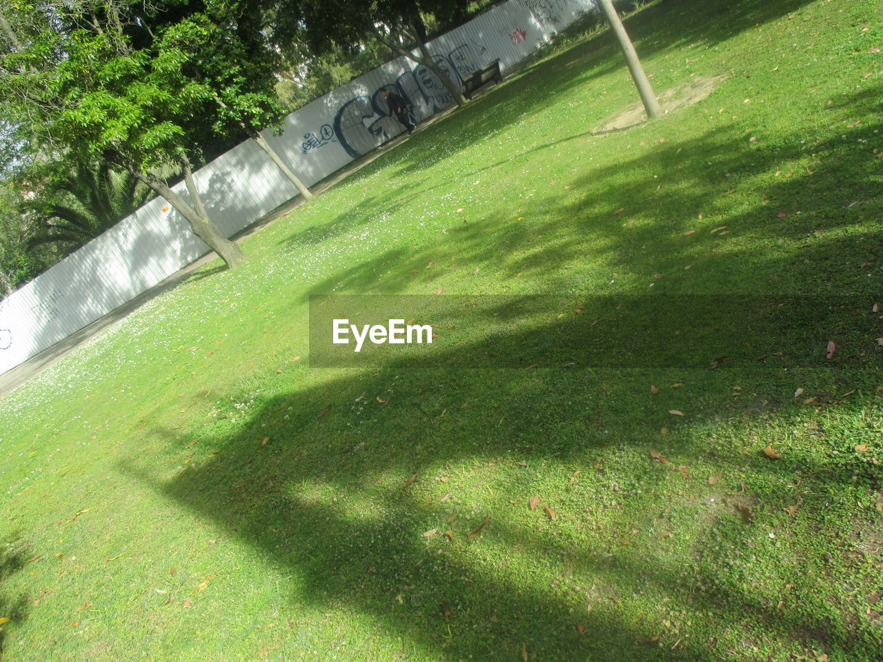 grass, green color, day, outdoors, sunlight, no people, tree, nature