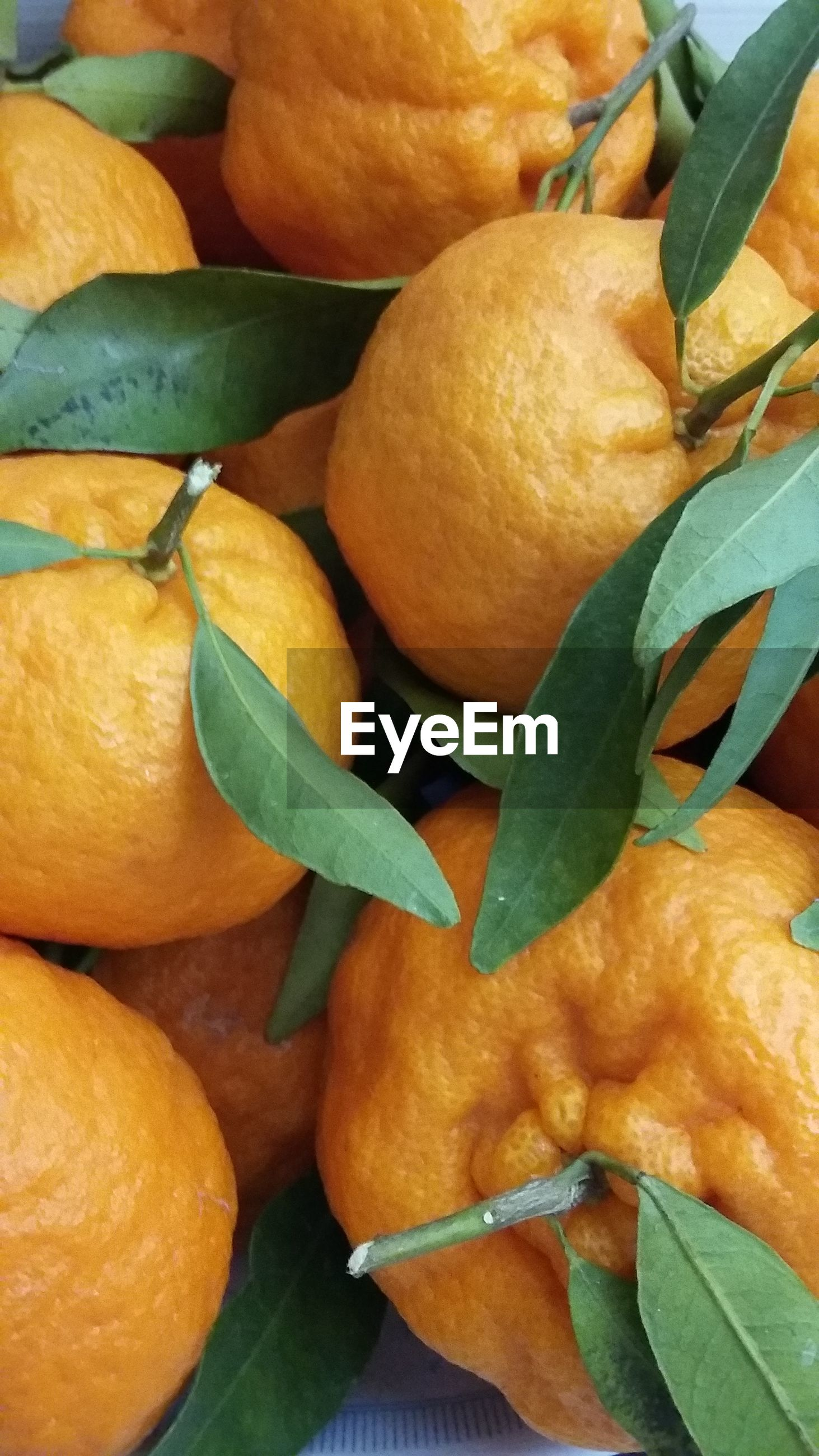 Full frame shot of oranges in container