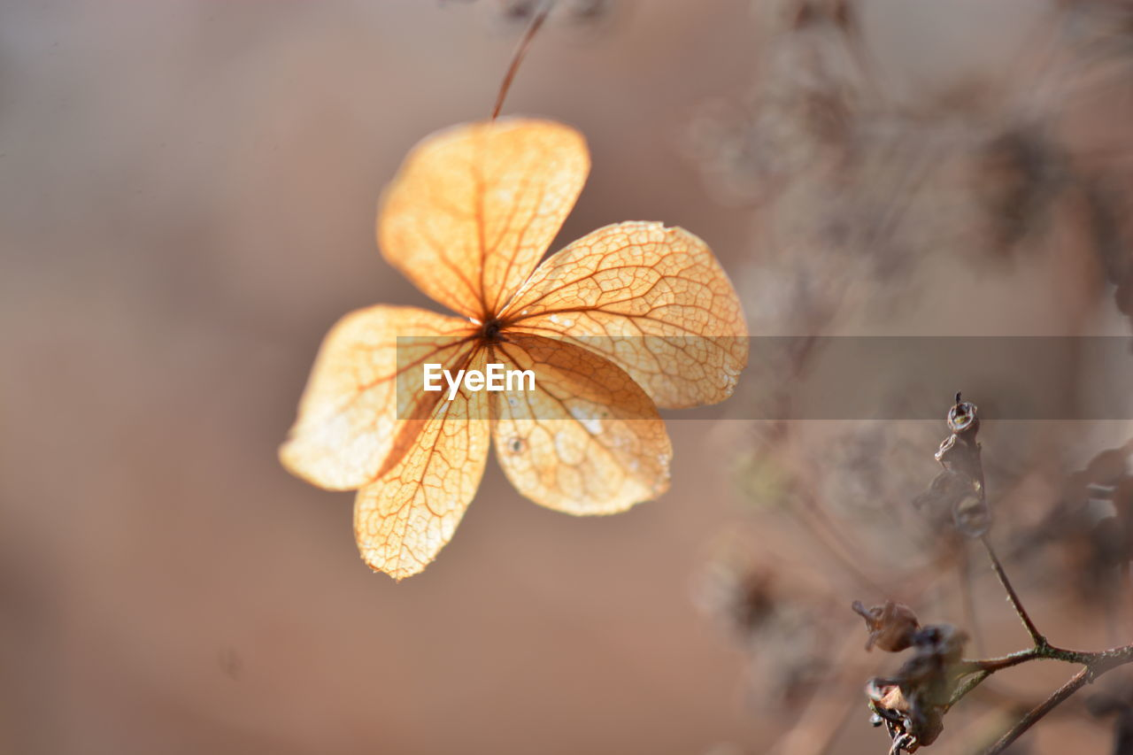 plant, close-up, selective focus, focus on foreground, vulnerability, fragility, beauty in nature, dry, no people, nature, plant part, leaf, day, growth, outdoors, flower, freshness, dried plant, flowering plant, autumn, leaves, wilted plant, dried